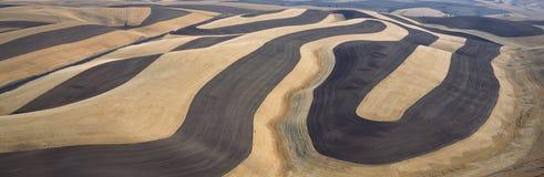 Поля пшеницы Стоковая Фотография