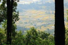 Поля риса в Непале стоковое фото
