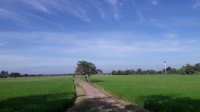 Поля риса в Таиланде Стоковое фото RF