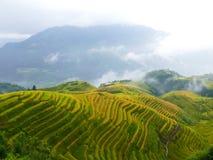 Поля риса гребня дракона Стоковое Фото