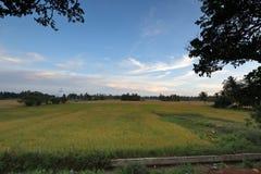 Поля риса на Tissamaharama в Шри-Ланке Стоковые Фото