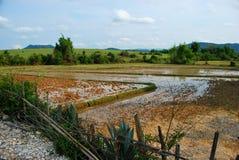 Поля рисовых полей около равнины археологических раскопок опарников Стоковое Изображение
