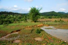 Поля рисовых полей около равнины археологических раскопок опарников Стоковое Изображение RF