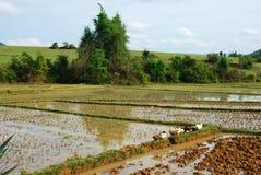 Поля рисовых полей около равнины археологических раскопок опарников Стоковая Фотография RF