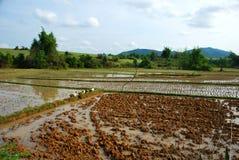 Поля рисовых полей около равнины археологических раскопок опарников Стоковые Фотографии RF