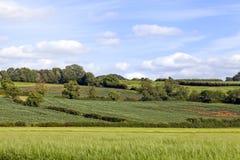 Поля страны зеленые, сельская английская сельская местность, Cotswolds Стоковые Фотографии RF