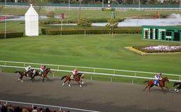 поля стробируют золотистые лошадиные скачки Стоковые Изображения RF