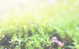 Поля травы для предпосылки Стоковые Изображения RF