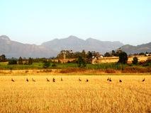 Поля травы на Chavonnes стоковые фотографии rf