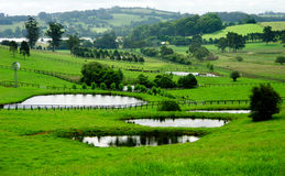 поля фермы Стоковое Фото
