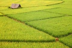 Поля хаты и риса Стоковые Изображения