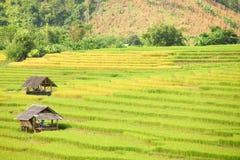 Поля хаты и риса Стоковая Фотография