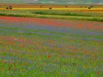 поля цветеня Стоковая Фотография RF