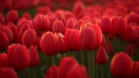 Поля цветка Природа Съемка тележки акции видеоматериалы