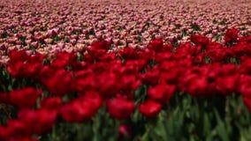 Поля цветка Природа Съемка тележки видеоматериал