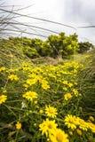 Поля цветков во время времени весны вдоль морского побережья дороги океана Виктории Австралии больших и океанов и скалы моря окре Стоковое фото RF