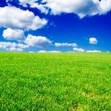 поля Стоковая Фотография RF