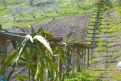 поля california Стоковое Фото