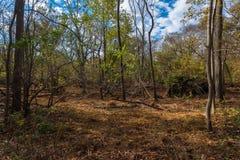 Пол древесин в осени Стоковые Фото