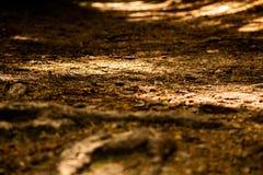 Пол леса осени стоковая фотография rf