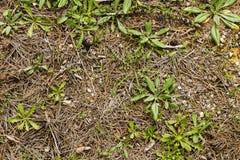 Пол леса Стоковые Фотографии RF