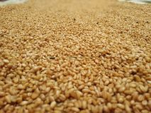 Пол пшеницы стоковое фото rf