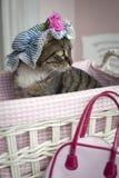 помадка кота Стоковые Изображения RF