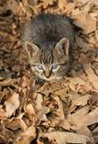 помадка котенка Стоковое фото RF