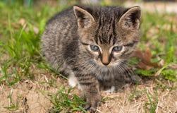 помадка котенка Стоковые Изображения RF