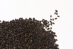 помадка семени базилика сухая Стоковые Фотографии RF
