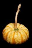 помадка тыквы молнии Стоковое Изображение RF