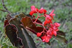 помадка цветка стоковая фотография