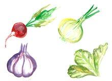 Помарки акварели установленные овощей Стоковое Изображение