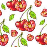 Помадка вишни на белой предпосылке Безшовная картина для конструкции Иллюстрации анимации Ручная работа Стоковая Фотография RF