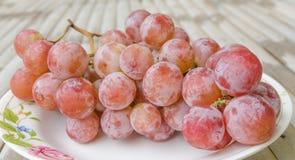 Помадка красной виноградины зрелая Стоковые Фотографии RF