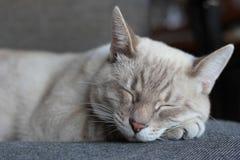 помадка сна Стоковое Фото