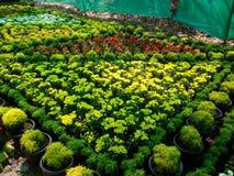 помадка цветка Стоковые Изображения RF