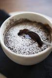 Помадка шоколада Стоковое Изображение RF