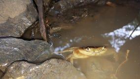 Помадка craby Стоковые Фото