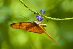помеец бабочки Стоковые Изображения RF