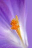 помеец зарева Стоковое Фото