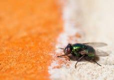 помеец зеленого цвета мухы кирпича Стоковое Изображение