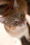 помеец кота Стоковые Изображения RF