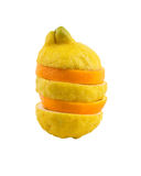 помеец лимона Стоковое Изображение RF