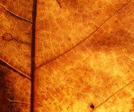 помеец листьев Стоковое Фото