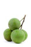 помеец пука зеленый Стоковое фото RF