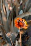 помеец сада цветка Стоковые Фотографии RF