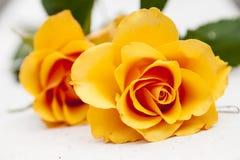помеец цветка поднял Стоковые Изображения RF