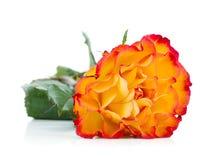 помеец цветка поднял Стоковые Фото