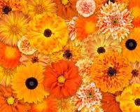помеец цветка предпосылки Стоковые Изображения RF